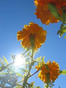 Sonnenschein, Vorfreude auf die Ibiza-Reise